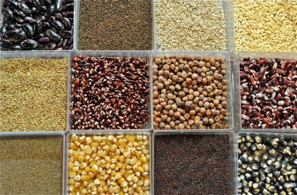 seeds2